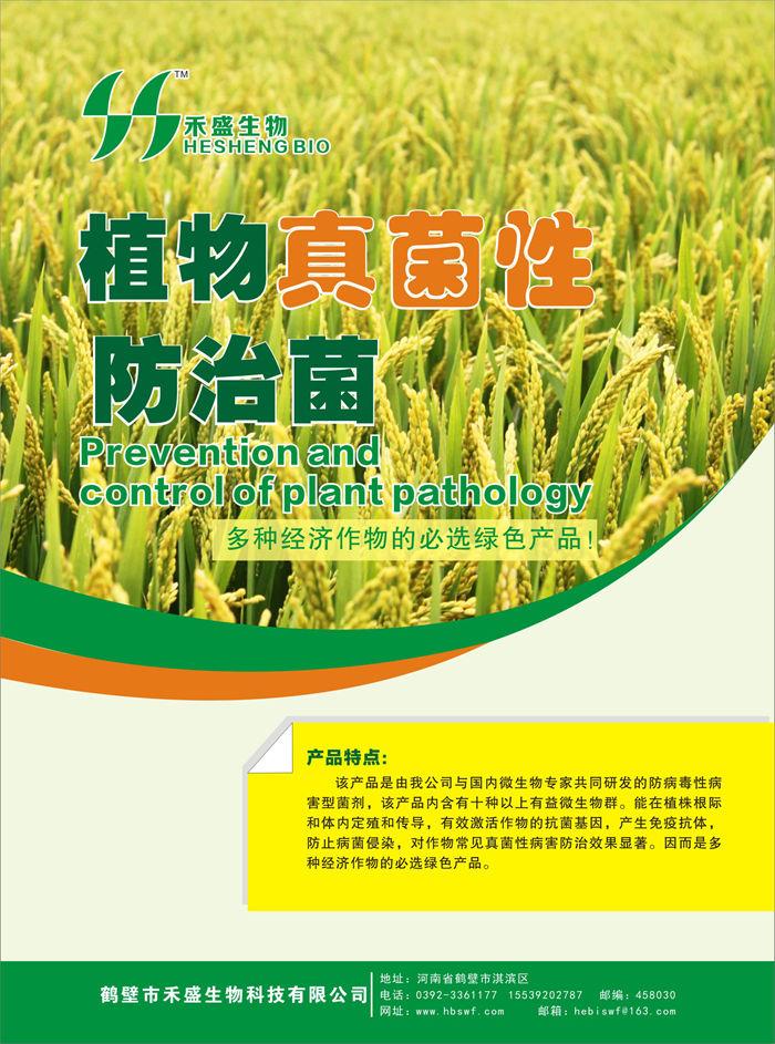 植物真菌性防治菌