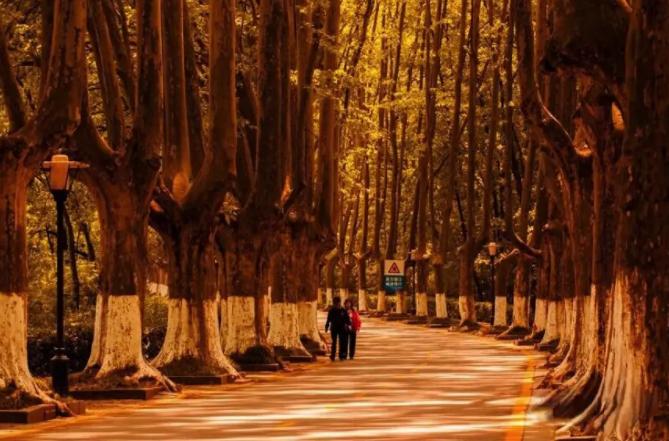 南京最美的季节,绵阳户外旅游俱乐部带你赏秋,享美味