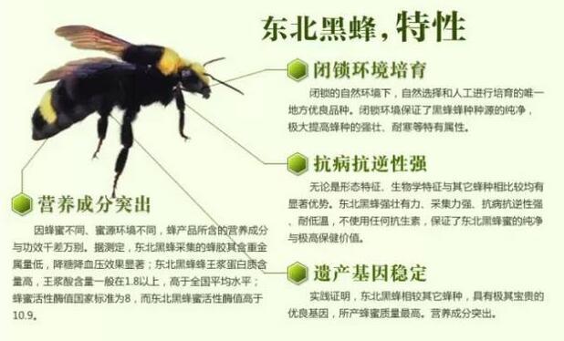 黑龙江黑蜂蜂蜜供应商品质纯正天然 黑龙江蓝沃蜂蜜厂