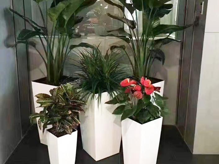 办公室花卉租摆