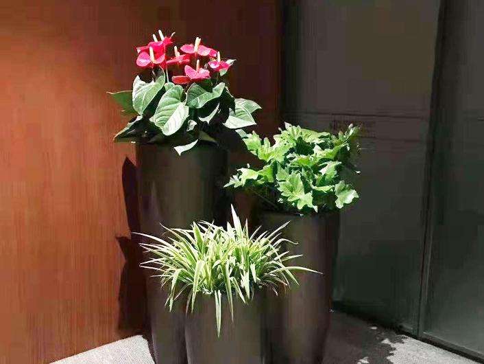 园艺花卉租赁