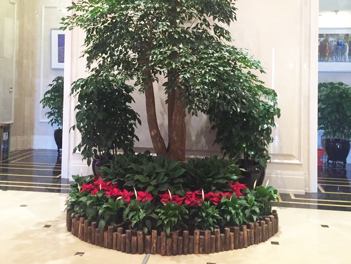 绿化花卉租赁