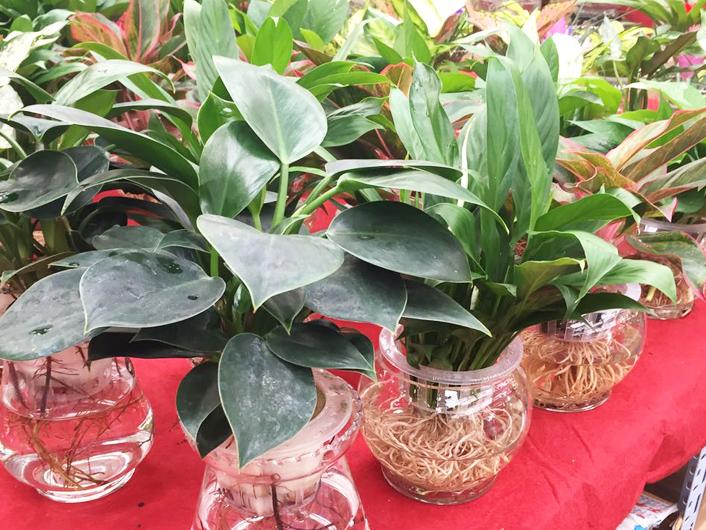花卉绿植租售