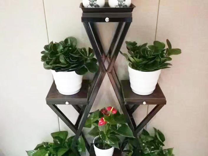 会议室植物租摆