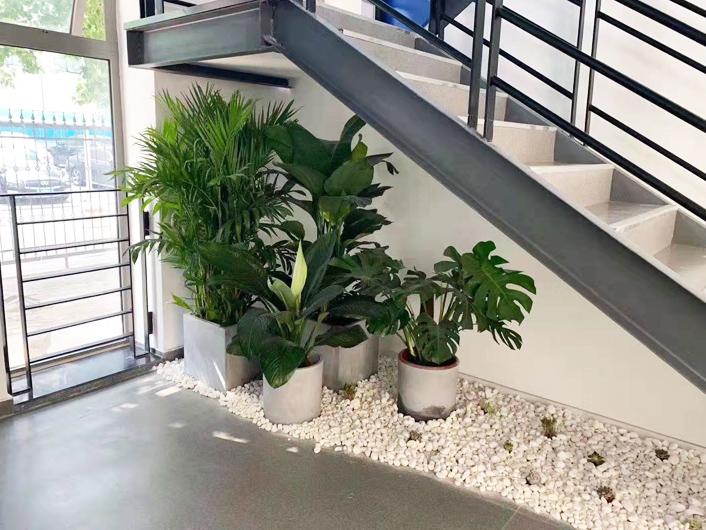 绿植短期租赁