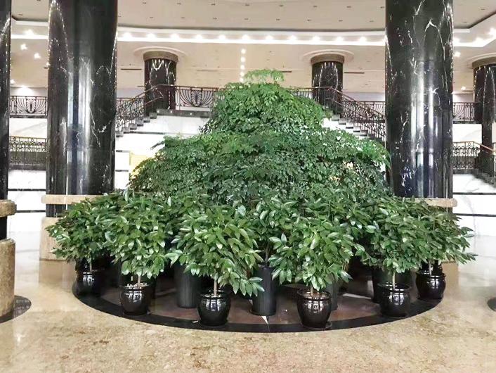 绿植盆栽租赁公司