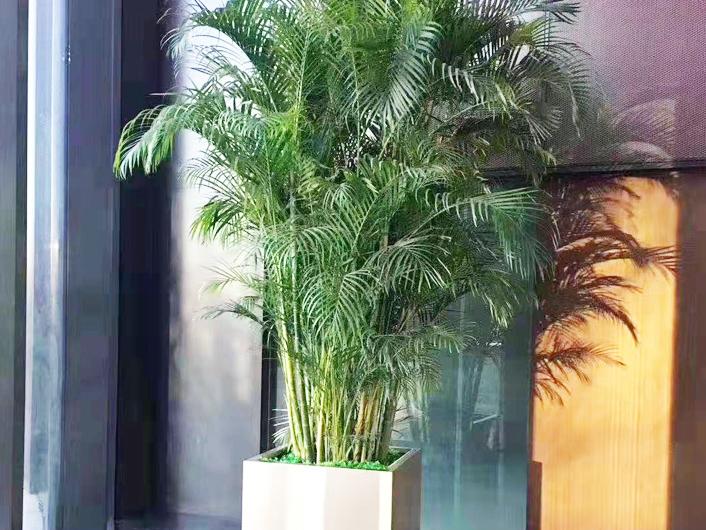 租赁绿植室内
