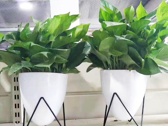 一级绿化养护