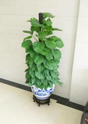 朝阳区室内绿植养护案例