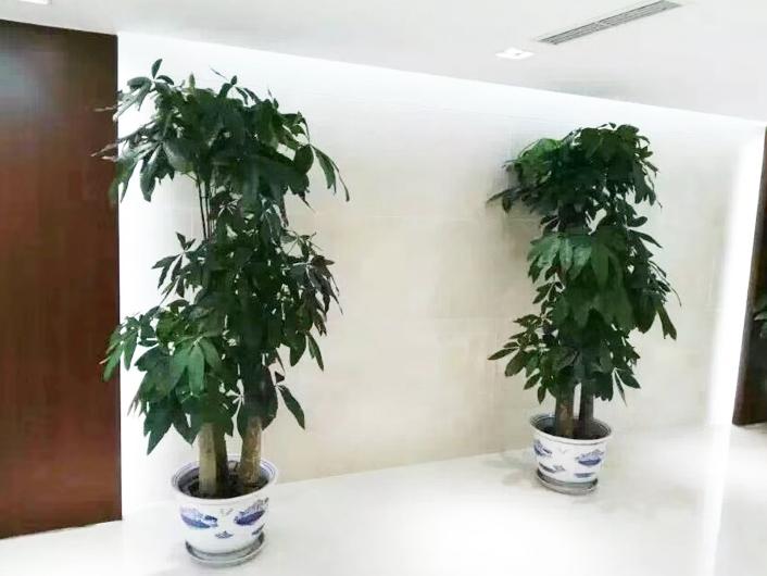 北京花卉绿植租赁公司介绍客厅摆放什么绿植寓意好