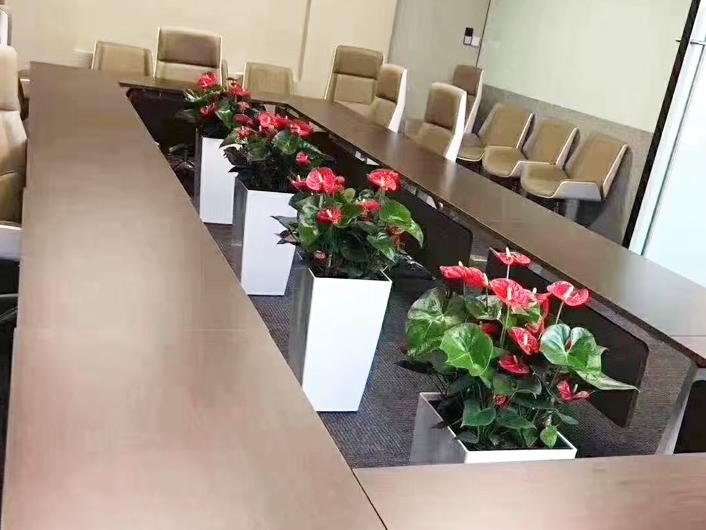 北京朝阳区办公司绿植租赁