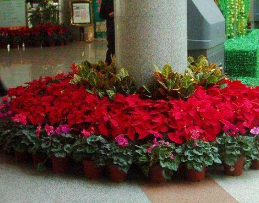花卉租赁公司需要注意的是什么?