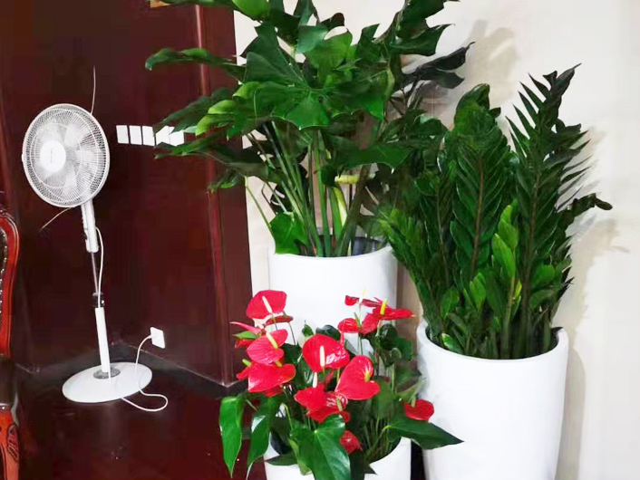 朝阳区办公室花卉租摆公司带您了解花卉的含义