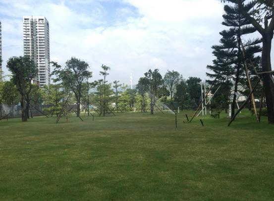 宣武区室外绿化养护