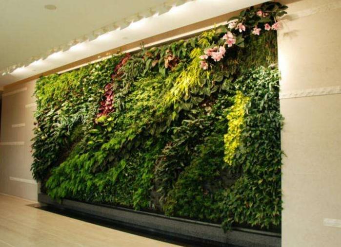 室内绿化植物墙