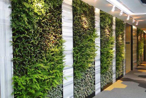 植物墙的设计方案,怎样反映它的美感
