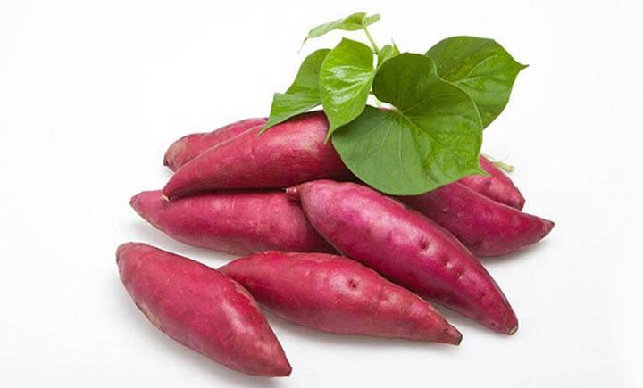 厂家告诉你关于有机肥的发酵原理的必备条件