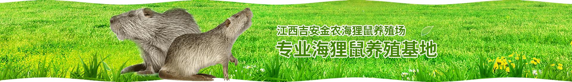 海狸鼠一般吃什么呢?海狸鼠的饮食习惯