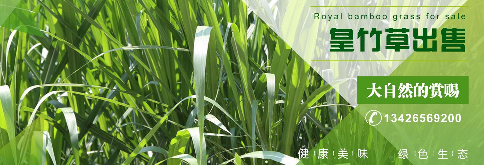 利用皇竹草养牛常见的两大问题了解一下