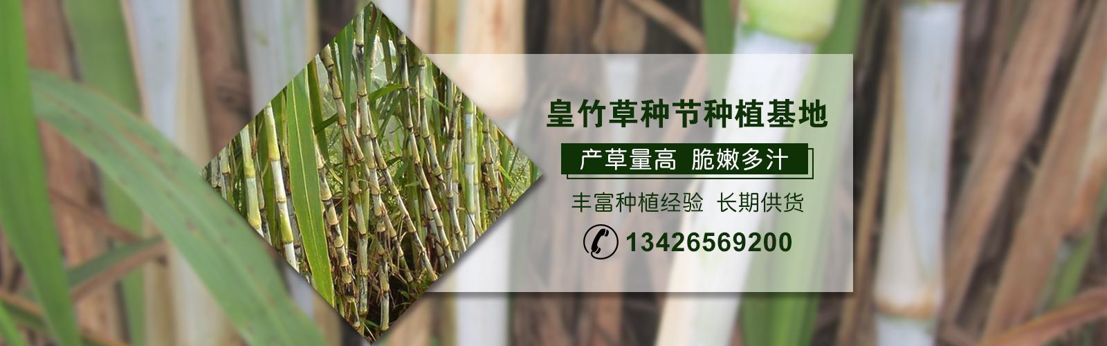 江西皇竹草