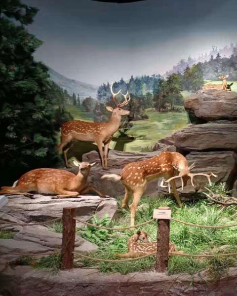 真梅花鹿小鹿标本