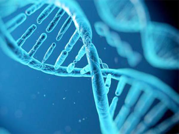 綿陽鹽亭DNA親子鑒定中液是怎么采集?