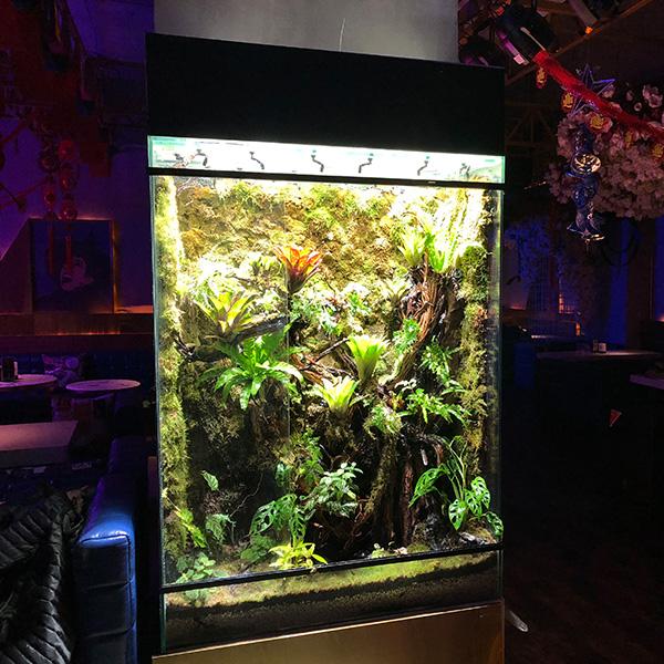 雨林缸造景植物