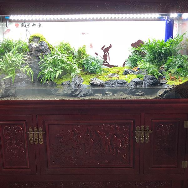 雨林生态缸造景