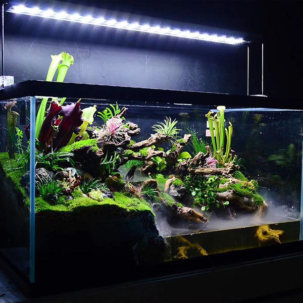 室内雨林缸制作