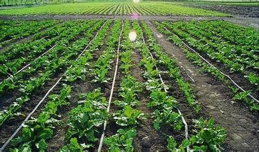 鶴崗/旅順使用滴灌施肥技術有哪些作用