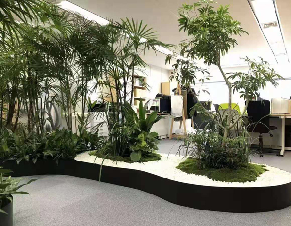 办公室绿植设计