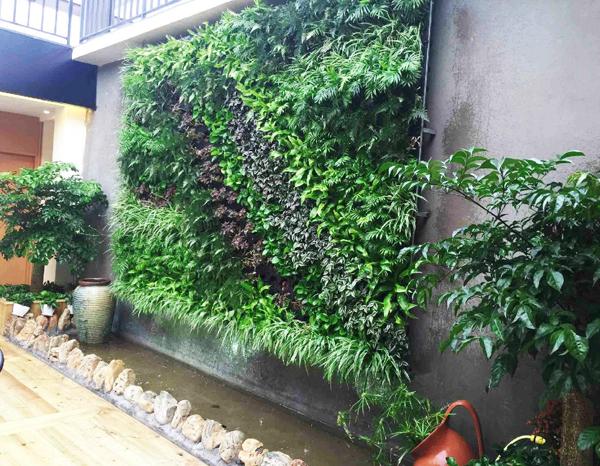 室外植物墙