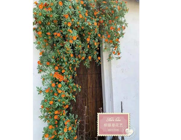 南阳仿真植物墙