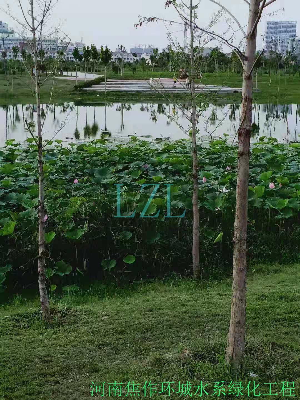 河南焦作环城水系绿化工程