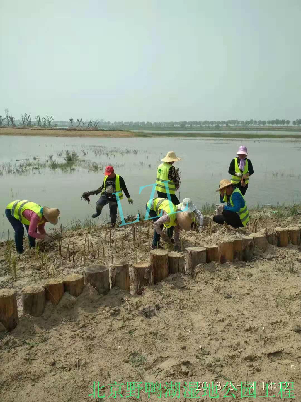 北京野鸭湖湿地公园工程