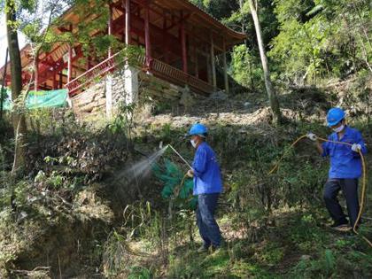 园林绿化树木白蚁防治