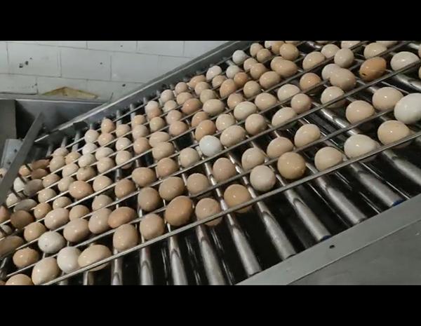 鸡蛋碎壳机