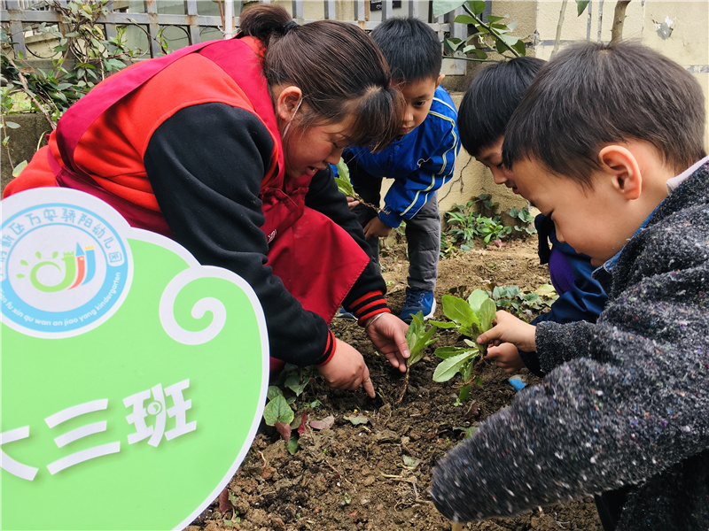 成都天府新區驕陽幼兒園讓孩子們體驗菜園成長記,感受大自然