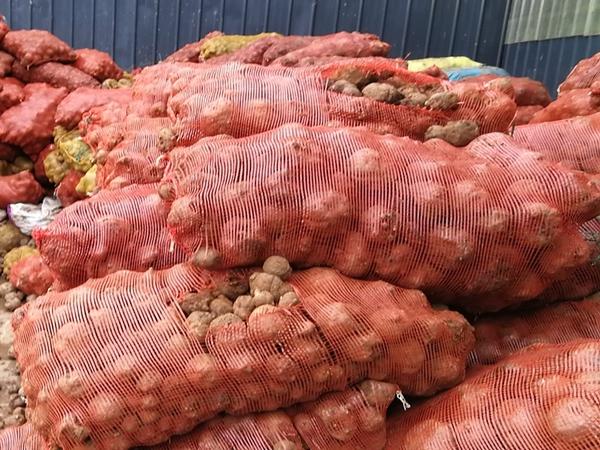 魔芋种子常见问题