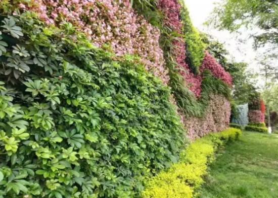 成都植物墙绿化公司