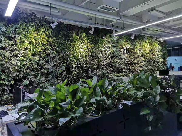 植物立体绿化