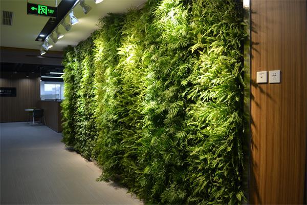 垂直绿化墙的类型有哪些?垂直绿化墙的作用?