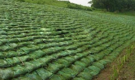 绿化生态袋