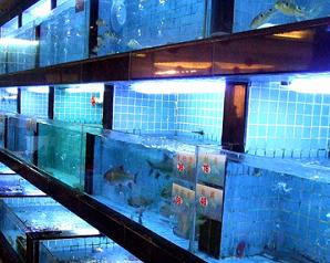 酒樓海鮮池