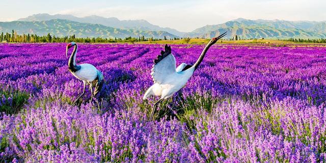 大家知道宿根花卉的栽培有哪些特点?