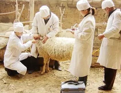 羊场免疫程序