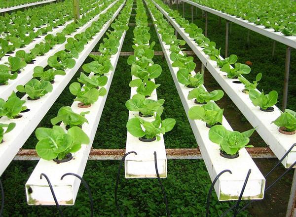 農業水肥一體化