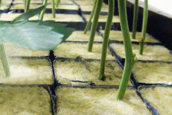 农用岩棉多少钱一平米
