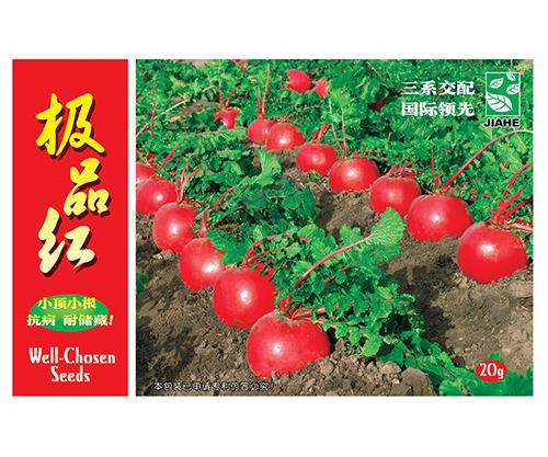 蔬菜种植过程中的常见施肥误区!一定要避免犯这些错误