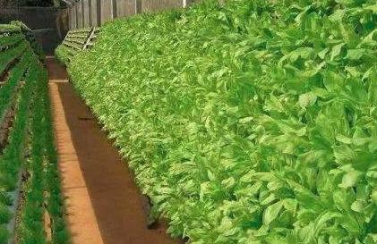 """怎样解决蔬菜种植中的""""重茬""""问题?"""